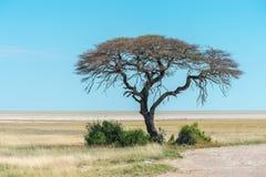 Vista della pentola di Etosha Fotografia Stock Libera da Diritti
