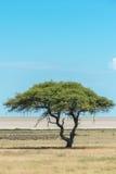 Vista della pentola di Etosha Immagini Stock