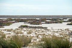 Vista della pentola di Etosha Fotografia Stock