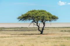 Vista della pentola di Etosha Fotografie Stock