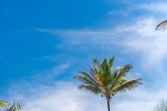 Vista della piantagione dell'albero del cocco dal pavimento inferiore Fotografie Stock