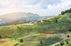 Vista della piantagione di verdure del terrazzo di verde di agricoltura in Tailandia Fotografia Stock