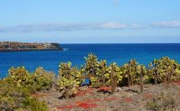 Vista della plaza di Islas nel Galapagos Immagine Stock Libera da Diritti