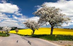 Vista della primavera della strada con il vicolo Immagini Stock Libere da Diritti