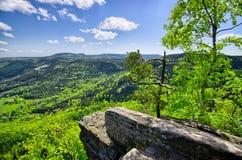 Vista della primavera sulla foresta e sui campi Immagini Stock Libere da Diritti