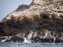 Vista della riserva delle isole di Farollon, incastramento degli uccelli immagini stock