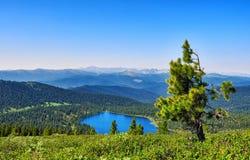Vista della scala del taiga della montagna Fotografie Stock