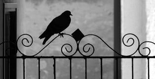 Vista della siluetta del piccione sull'inferriata del ferro battuto immagini stock