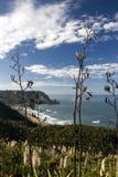 Vista della spiaggia attraverso i cespugli del lino, costa ovest, isola del nord, Nuova Zelanda di Piha Immagine Stock Libera da Diritti