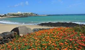 Vista della spiaggia a Costa Teguise Lanzarote con i fiori arancio Immagine Stock Libera da Diritti