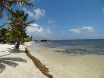 Vista della spiaggia del Belize Fotografie Stock