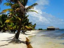 Vista della spiaggia del Belize Fotografia Stock Libera da Diritti