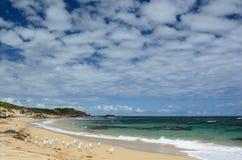 Vista della spiaggia occidentale Isola del pinguino Parco marino delle isole di Shoalwater Rockingham Australia occidentale Immagine Stock Libera da Diritti