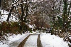 Vista della strada asfaltata nella bella foresta dorata di L'aia durante l'inverno Immagine Stock