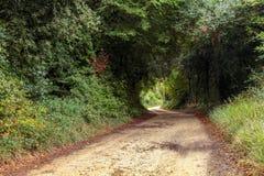 Vista della strada pietrosa che passa attraverso il boschetto Fotografie Stock Libere da Diritti