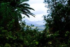 Vista della valle dalle montagne di Oahu Pali Immagine Stock Libera da Diritti