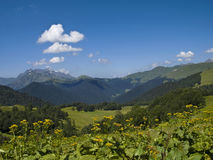 Vista della valle della montagna con i fiori Fotografia Stock