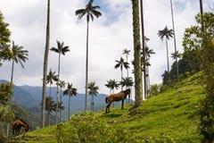 Vista della valle Valle del Cocora di Cocora in Colombia con gli alberi ed i cavalli della palma da cera Fotografie Stock Libere da Diritti