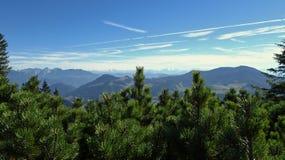 Vista delle alpi con i pini nella priorità alta Fotografia Stock
