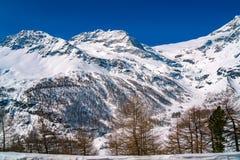 Vista delle alpi coperte di neve dal treno espresso di Bernina Fotografie Stock