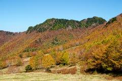 Vista delle foglie di autunno del pascolo di Shiga Kogen immagine stock libera da diritti