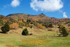 Vista delle foglie di autunno del pascolo di Shiga Kogen immagine stock