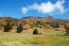 Vista delle foglie di autunno del pascolo di Shiga Kogen fotografia stock libera da diritti