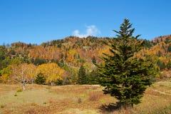 Vista delle foglie di autunno del pascolo di Shiga Kogen fotografie stock libere da diritti