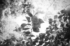 Vista delle foglie e dei fiori da sotto alle cime d'albero Fotografie Stock