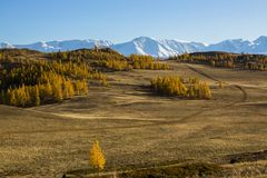 Vista delle montagne di Altai e della steppa di Kurai nella Repubblica di Altai Fotografia Stock Libera da Diritti