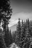 Vista delle montagne di Bucegi immagini stock libere da diritti
