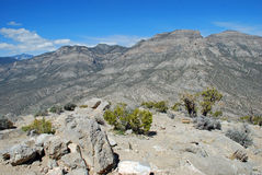 Vista delle montagne di Madre della La in canyon rosso della roccia, NV Fotografia Stock Libera da Diritti