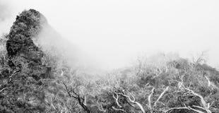 Vista delle montagne e degli alberi asciutti nella nebbia fotografia stock libera da diritti