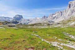 Vista delle montagne invase con il legno Fotografia Stock