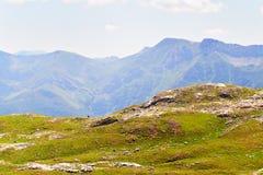 Vista delle montagne invase con il legno Immagini Stock Libere da Diritti