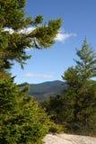 Vista delle montagne tramite i pini Immagine Stock