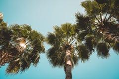 Vista delle palme da sotto con il fondo del cielo blu, stile d'annata Fotografia Stock