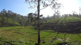 Vista delle piantagioni di tè dal treno stock footage