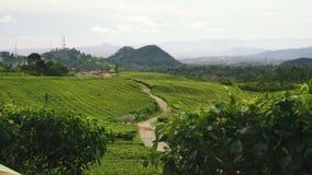 Vista delle piantagioni e delle colline di tè video d archivio