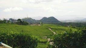 Vista delle piantagioni e delle colline di tè stock footage