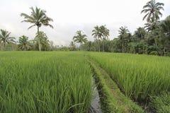 Vista delle risaie Immagini Stock Libere da Diritti