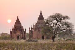 Vista delle tempie antiche al tramonto in Bagan, Myanmar immagine stock