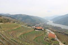 Vista delle vigne che trascurano il fiume del Duero - Portogallo fotografia stock libera da diritti