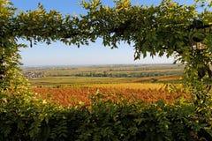 Vista delle vigne d'autunno Fotografie Stock Libere da Diritti