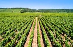Vista delle vigne di Cote de Nuits in Borgogna, Francia fotografia stock libera da diritti