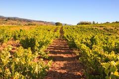 Vista delle vigne nella campagna spagnola Immagine Stock