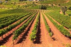 Vista delle vigne nella campagna spagnola Immagine Stock Libera da Diritti