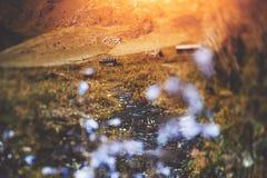 vista dello Inclinazione-spostamento delle montagne di Altai, cabine, corrente Immagine Stock Libera da Diritti