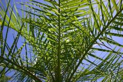 Vista dentro da palmeira imagens de stock
