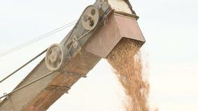 Vista detalhada de um córrego constante da grão do trigo de uma liga ou da máquina de classificação em um recipiente ou em um arm vídeos de arquivo